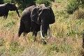 Elephants, Tarangire National Park (18) (28622560081).jpg