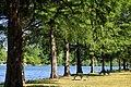 Emma long park shoreline 2014.jpg