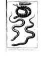 Encyclopedie volume 5-053.png
