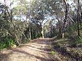 Engadine NSW 2233, Australia - panoramio (182).jpg