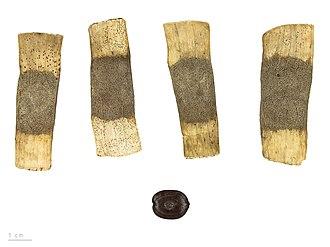 Entada - Entada polyphylla - MHNT