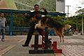 Entrenamiento Canino deportivo.jpg