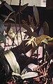 Epidendrum nocturnum - pl.jpg