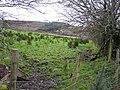 Erganagh Glebe - geograph.org.uk - 1610651.jpg