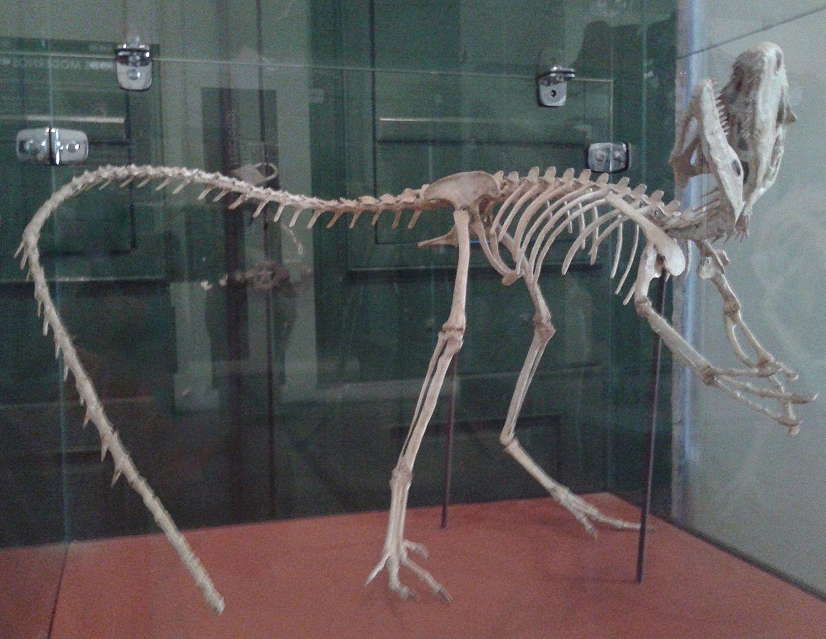 Santanaraptor - Wikipedia