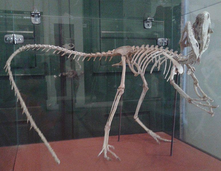 File:Esqueleto de Santanaraptor MN 01.jpg