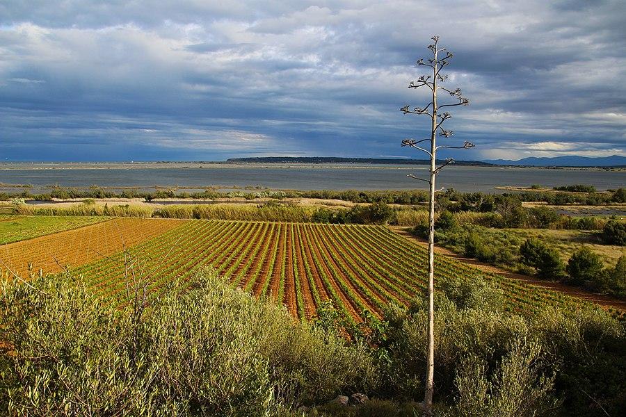Une vue depuis la garrigue sur l'étang de La Palme et au loin sur la falaise de La Franqui