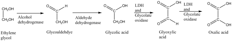Ethylene glycol toxication.png