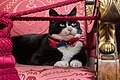 FCO Chief Mouser Palmerston.jpg