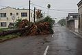 FEMA - 37198 - Palm tree laying in a Texas street.jpg