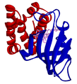 FKBP-sirolimus-mTOR complex 1FAP.png