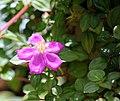 FLOWERS 4 (7238038064).jpg