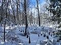 FL Swamp covered in Snow (5304113558).jpg