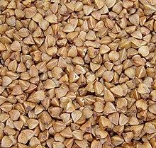 buckwheat wikipedia