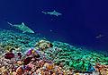 Fakarava Atoll Passe Sud.jpg