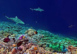 Fakarava Atoll Passe Sud