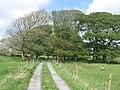Farm lane near Kilfenora - geograph.org.uk - 1361063.jpg