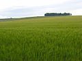 Farmland, Hanging Langford - geograph.org.uk - 475851.jpg
