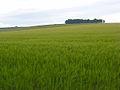 Farmland, Hanging Langford - geograph.org.uk - 475851.jpg