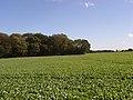 Farmland beside Scroggin's Copse - geograph.org.uk - 257387.jpg