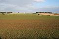 Farmland near Fillingham - geograph.org.uk - 581392.jpg