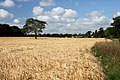 Farmland near Horringer - geograph.org.uk - 1394147.jpg