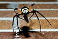 Female Garden Spider Consuming A Moth.jpg