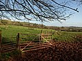 Fenced area by the lane to Millcombe Barn - geograph.org.uk - 1062460.jpg