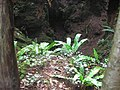 Ferns and a big hole - Puzzlewood - July 2011 - panoramio.jpg