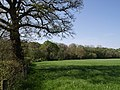 Field beside River Lyd - geograph.org.uk - 431621.jpg