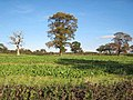 Field near West Tanfield - geograph.org.uk - 274517.jpg
