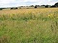 Fields beside the path - geograph.org.uk - 1440676.jpg