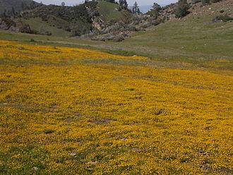 Figueroa Mountain - Image: Figueroa flower field 2005