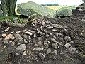 Firse sten (Raä-nr Falköpings Östra 1-1) utgrävning-08 1343.jpg