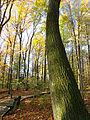 Flickr - Nicholas T - Hogback Ridge Park (4).jpg