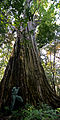 Flickr - ggallice - Strangler fig.jpg