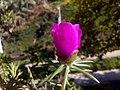 Flor de Artur 6.jpg
