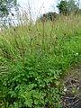 FloraHildenJune (6).JPG