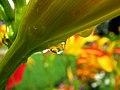 Floral Drops (3749908988).jpg