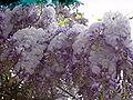 Flower 04375 n.JPG