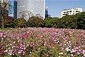 Flower field (2088334856).jpg