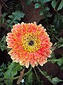 Flowers - Uncategorised Garden plants 11.JPG