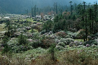 North Sikkim district - Wildflowers of North Sikkim