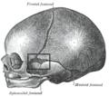 Fonticulussphenoidalis.PNG