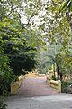 Footbridge - Agri-Horticultural Society of India - Alipore - Kolkata 2013-01-05 2235.JPG