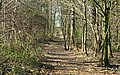 Footpath in the Hardwick Estate - geograph.org.uk - 804629.jpg