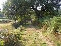 Footpath near B4295 near Dan-y-lan East of Pen Clawdd - geograph.org.uk - 558353.jpg