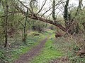 Footpath near Wraysbury - geograph.org.uk - 156495.jpg