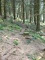 Footpath through Cynwyd Forest - geograph.org.uk - 418052.jpg