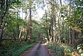 Footpath through Price's Wood - geograph.org.uk - 1537498.jpg